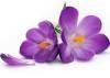 Lavender's picture